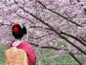 杭州网上在线日语培训-必知-费用